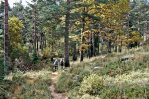 Forest Hike near Lamas de Mouro