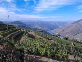 Douro Views