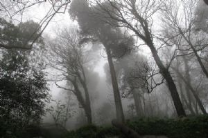 Sintra-Forest