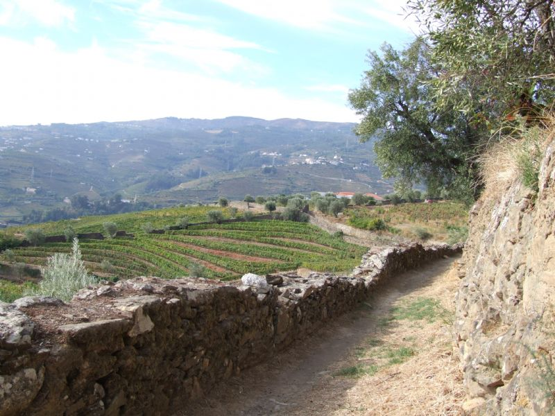 Along the Vineyards