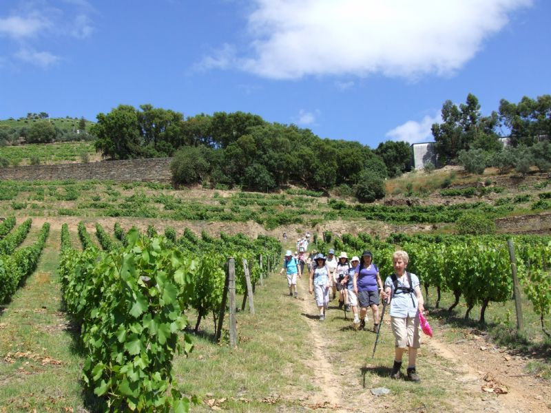 Guided Douro