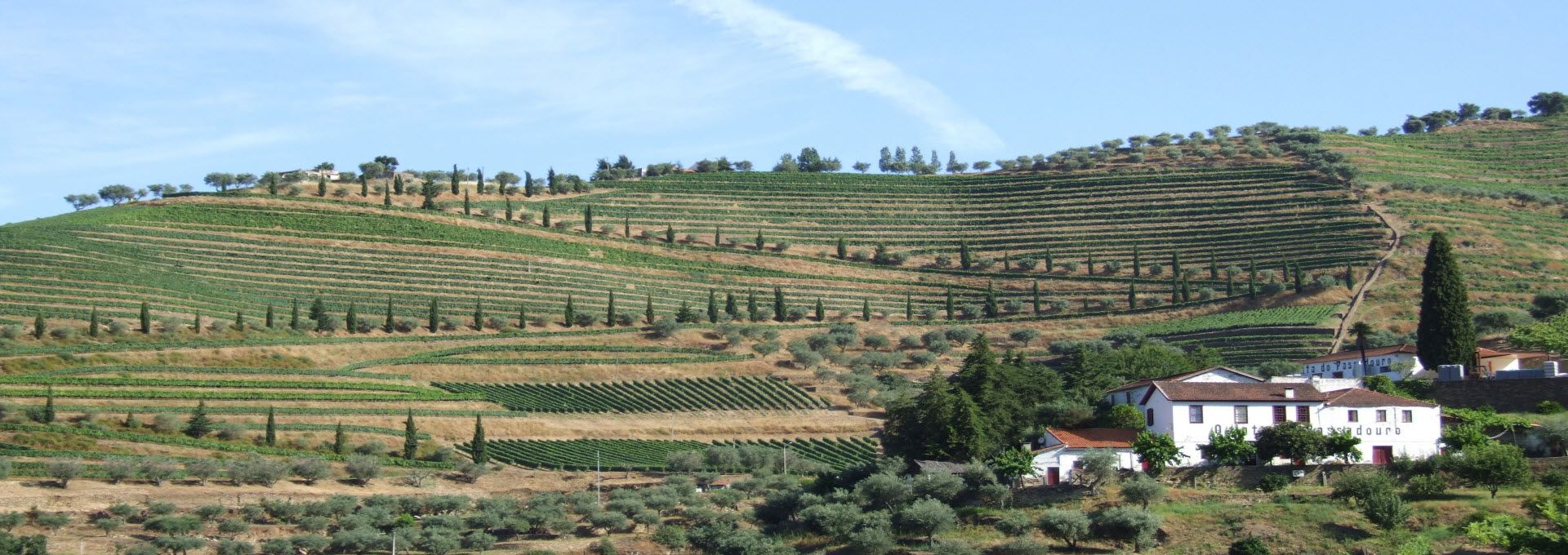 Guided Douro Vineyards